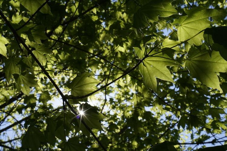木漏れ日 Green