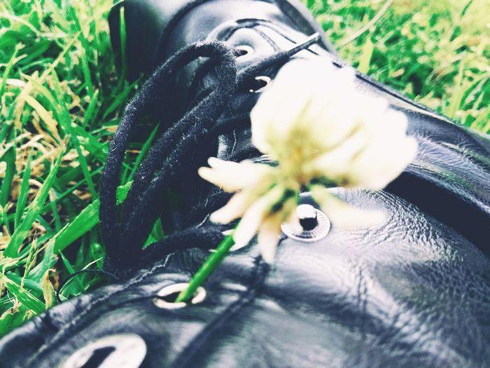 Flower Flower Head Close-up Grass Green Color