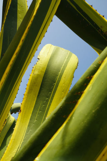 Close-up of yellow leaf on plant