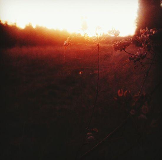 Nature Sunset Wildflower First Eyeem Photo