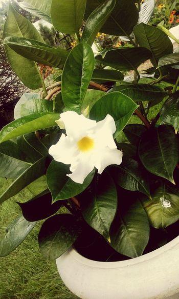 Flower White Vintage Gorgeous Nature Beauty Trishann Artlovelaughter