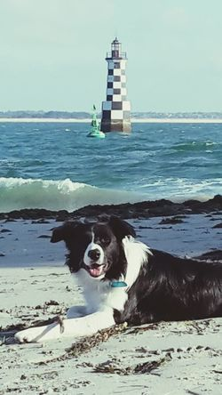 Kopin devant le phare de la perdrix. Finistère. Bretagne . France