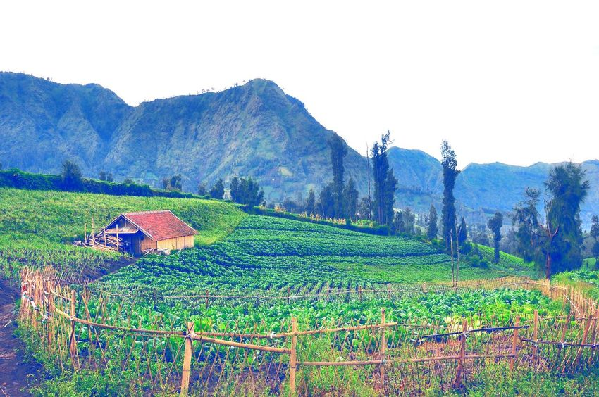 Farmland Farmlandscape Farmlife Farm Living Agriculture Plantation Vegetable Fence Mountain Village Village Life Fresh Morning ☀