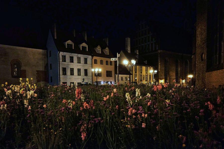 Городская клумба. Night Illuminated Flower Building Exterior Architecture Outdoors No People Built Structure Sky Vecriga Riga Riga Latvia