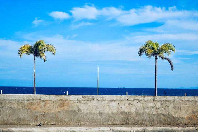 Sky Nature Outdoors Seaside Powerplant Power Line  Power Supply Blue Palm Tree Palm Coal Coal Fired Power Station