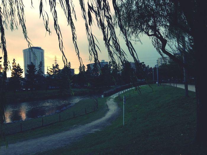 柳 A Walk In The Park