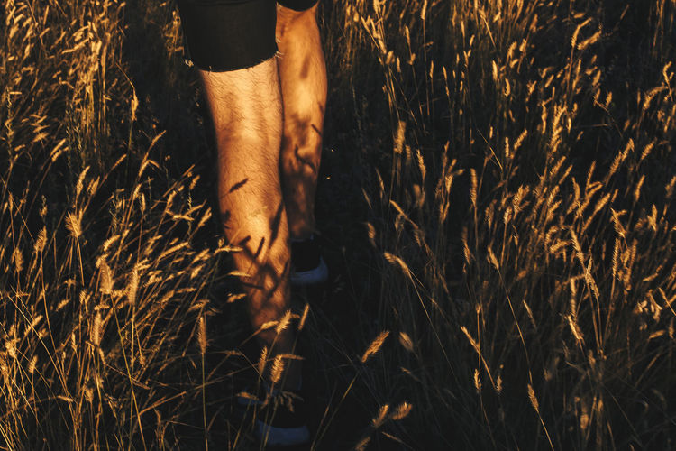 Midsection of man in grass
