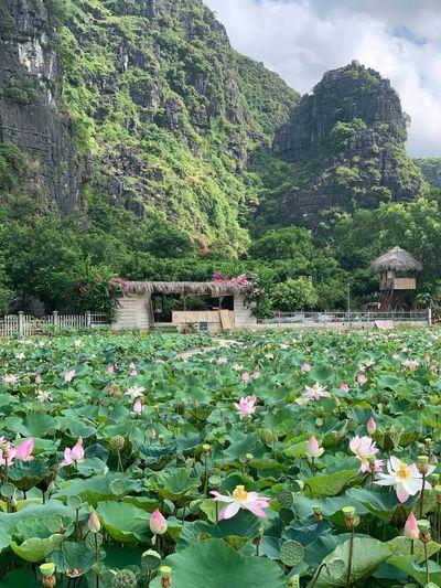 View of flowering plants in water