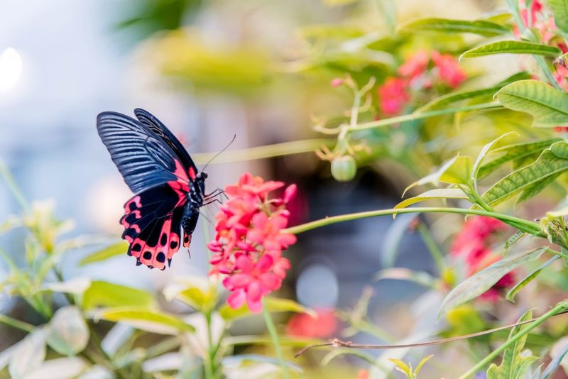 Tasting a sweet flower Insect Animals In The Wild Animal Themes Nature Flower Butterfly - Insect Fragility No People Beauty In Nature Plant Focus On Foreground Close-up Freshness Animal Wildlife Outdoors Growth Flower Head Pollination Day