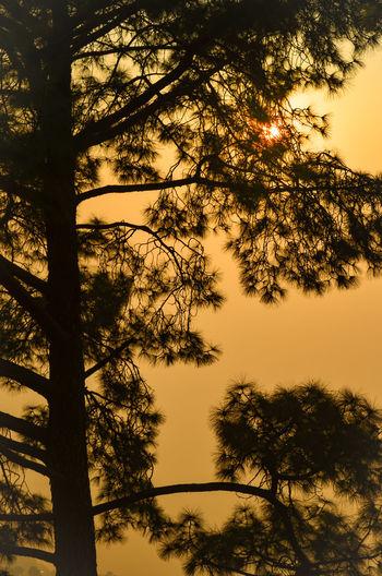 Sunset Shimla