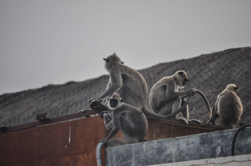 View of monkey on roof against clear sky