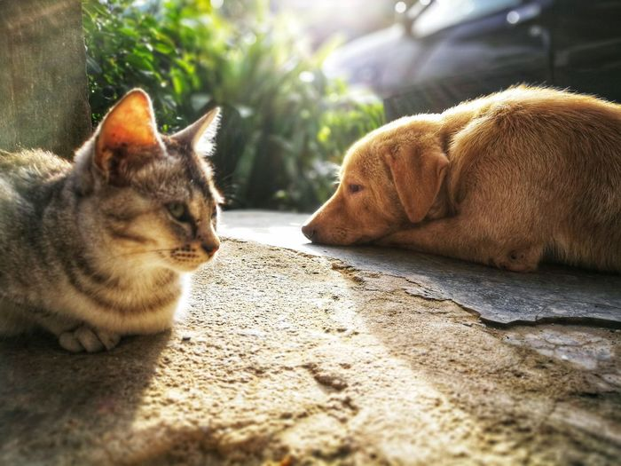 Domestic Pets Mammal Animal Themes Domestic Animals Animal One Animal Relaxation Cat Vertebrate Domestic Cat Feline Sunlight No People Lying Down Dog Canine Nature Resting Animal Body Part