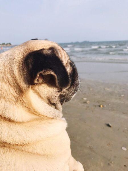 ทะเลช่างดูอ้างว้างจัง One Animal Dog Pets Domestic Animals Animal Themes Mammal Day Outdoors No People Beach Nature Close-up Sky