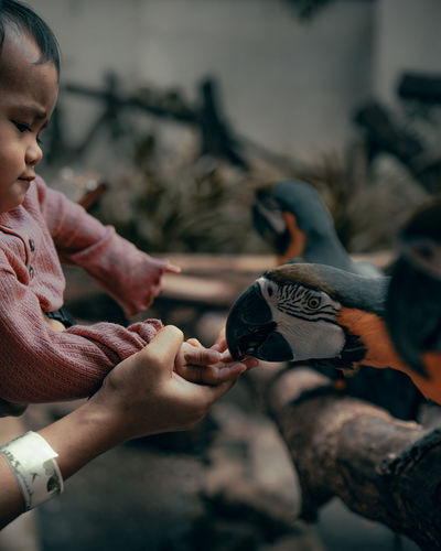 Side view of girl playing with birds outdoors