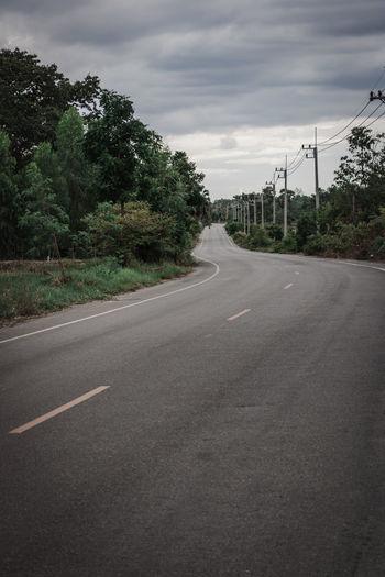 ROAD Road Tree