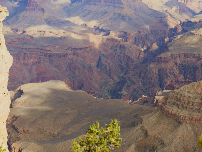 Grand Canyon Arizona Environment Beauty In Nature Formation America Sky Grand Nature Scenary Erosion Scerenity Grand Canyon National Park Beauty Redefined Garden Paradise Tree Photography Outdoors Photooftheday No People