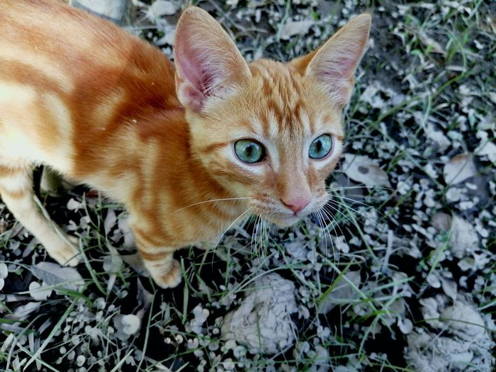 Pets Portrait Feline Domestic Cat Looking At Camera Leaf High Angle View Animal Themes Close-up Plant Cat