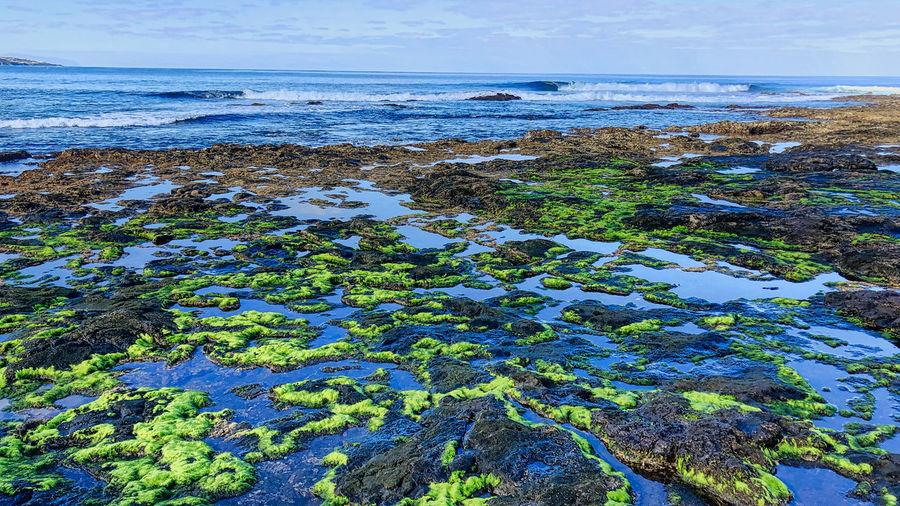 Rocky coast, Punta del Hidalgo, Tenerife Norte Water Sea Scenics - Nature Beauty In Nature Rock Beach Horizon Over Water