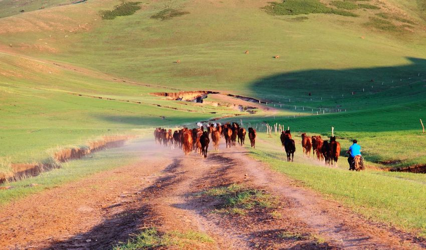 Agriculture Nature Landscape Beach Real People Sand Outdoors Large Group Of People Sky Adults Only Day Only Men Adult People horse 草原 收工