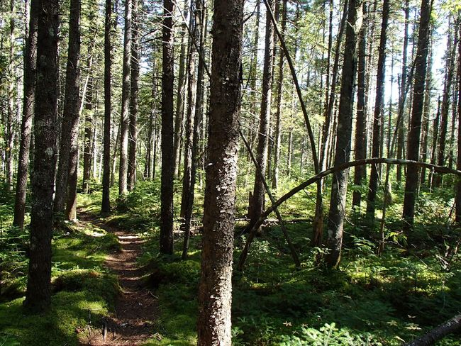 Forêt mixte laurentienne - Laurentian Mixed Forest (Parc national de la Mauricie) Trail Tree Forest Plant Land WoodLand No People Beauty In Nature Nature Outdoors Sunlight