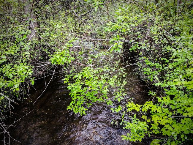 Backgrounds Green Color Day Outdoors Nature Sunlight EyeEm Selects EyeEmNewHere Beauty In Nature Tree Water River Scenics Atmospheric Mood Tranquil Scene