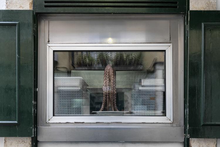 Octopus seafood restaurant