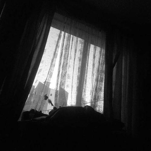 ROSTRO DE VOS Tengo una soledad tan concurrida tan llena de nostalgias y de rostros de vos de adioses hace tiempo y besos bienvenidos de primeras de cambio y de último vagón. Tengo una soledad tan concurrida que puedo organizarla como una procesión por colores tamaños y promesas por época por tacto y por sabor. Sin temblor de más me abrazo a tus ausencias que asisten y me asisten con mi rostro de vos. Estoy lleno de sombras de noches y deseos de risas y de alguna maldición. Mis huéspedes concurren concurren como sueños con sus rencores nuevos su falta de candor yo les pongo una escoba tras la puerta porque quiero estar solo con mi rostro de vos. Pero el rostro de vos mira a otra parte con sus ojos de amor que ya no aman como víveres que buscan su hambre miran y miran y apagan mi jornada. Las paredes se van queda la noche las nostalgias se van no queda nada. Ya mi rostro de vos cierra los ojos y es una soledad tan desolada. MARIO BENEDETTI Poetry Poesia Díadelapoesía Mariobenedetti Rostrodevos