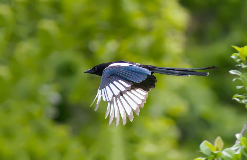 Close-up of bird flying against blurred background