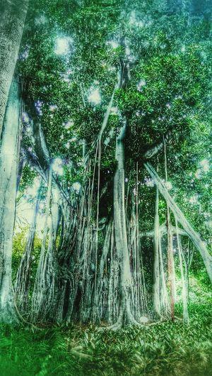 Trees Tree Djungle Baum FeenWorld Phantasy Phantasie How's The Weather Today? TreePorn