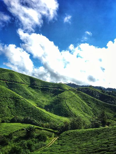 Nature at its best. Nature Beauty In Nature Sky Cloud - Sky Green Color Day Mountain Outdoors Tea Crop Tree Highlands Cameronhighlands Tranquility Views Vibes Mothernatureatherbest Photography Malaysia Truly Asia Visit Malaysia Malaysia Truly Asia First Eyeem Photo Trail Walking Trail