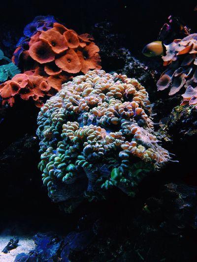 Vscocam VSCO Aquarium Natavega Fish Love Enjoying Life Taking Photos Check This Out