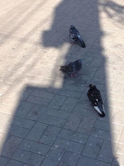 High angle view of bird on shadow