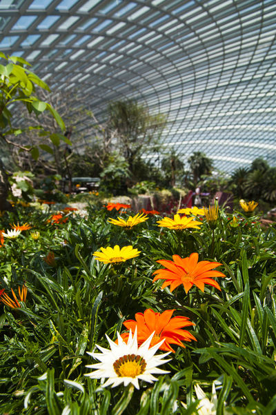 Flowers under a glass dome. Flower Garden Gardens By The Bay Singapore Glass Roof Beauty In Nature Close-up Flower Head Flowers Glass Dome Glass Roof. Modern Structure Nature And Architecture In Harmony No People