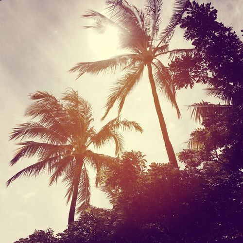 Palm Trees Paradise Hawaii Sun
