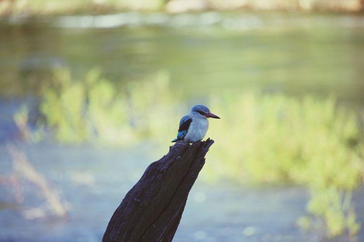 Tree bird Bird