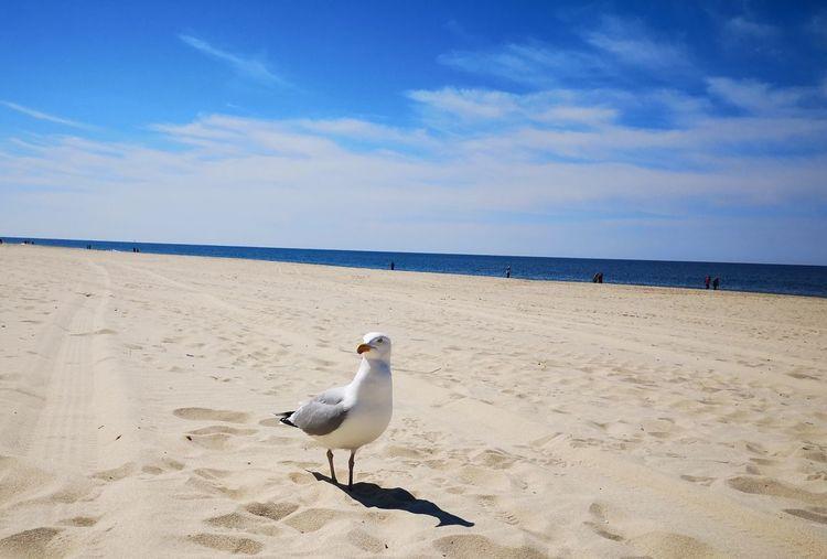 Bird Sand Dune