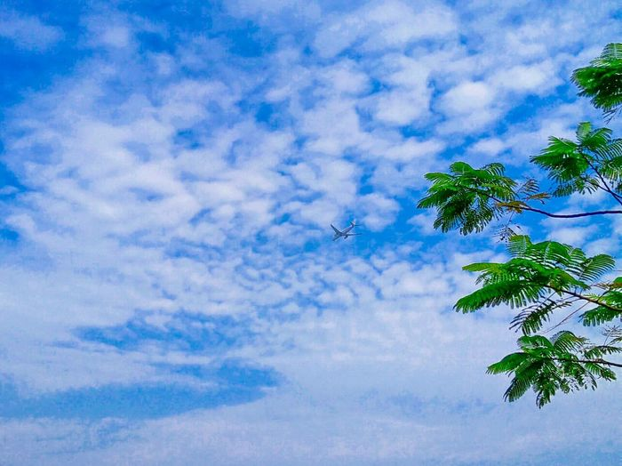 Low Angle View Scenics Blue Sky Tranquility Tranquil Scene Beauty In Nature Tree Cloud - Sky Branch Cloudy Cloud Hi Taking Photos