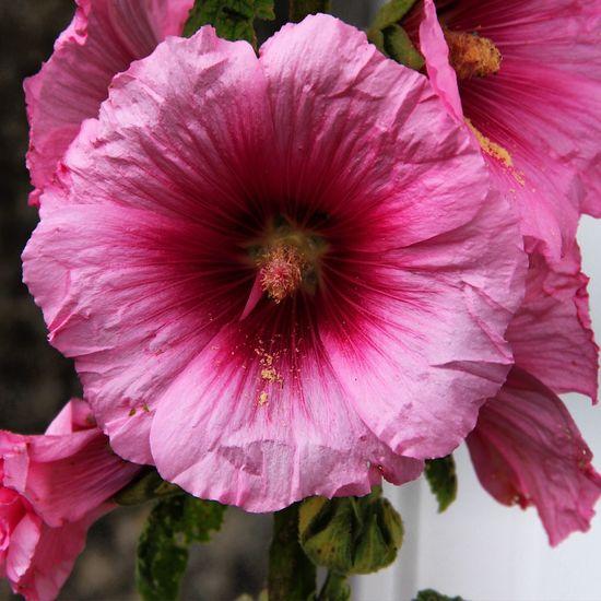 Douceur Flower Nature_collection Nature Flowerporn