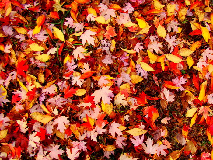 Fall Colors Fall Beauty Autumn Patterns Leaf Carpet Autumn Beauty In Nature Change Close-up Day Fall Fragility High Angle View Leaf Leaves Nature No People Orange Color Outdoors Plant Part Vulnerability