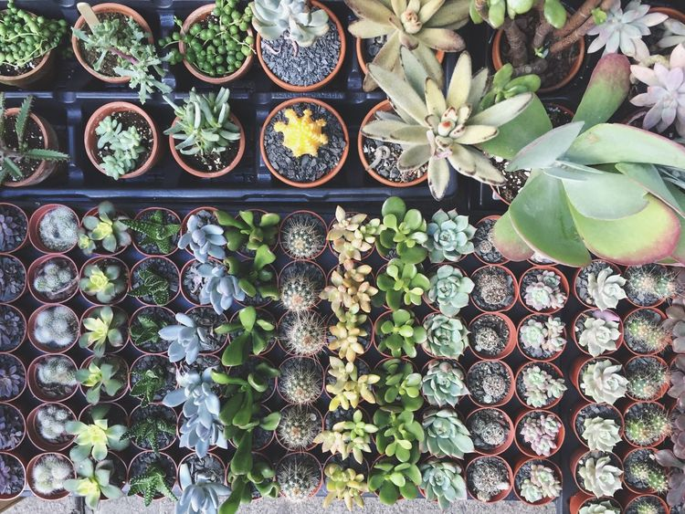 Cacti Succulents Topdown Birdseyeview Plants Life Green