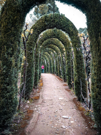 park arches One Person Figure Park - Man Made Space Arches Tunnel Green Tunnel Formal Garden Garden Palace Garden Topiary Pathway Garden Path Narrow Arched Lane Long Hedge Walkway Woods vanishing point Diminishing Perspective Archway The Way Forward Treelined Creeper Empty Road Stepping Stone