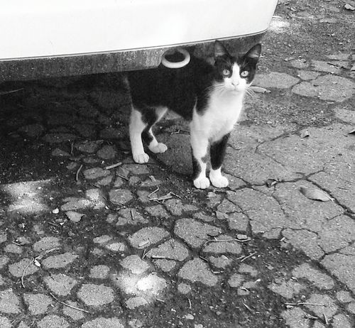 Monochrome Black And White Cat Black & White Taking Photos EyeEm Cats Cat Under The Car Streetphotography Cleaning My Account At EyeEmjj EyeEm Bnw Let's Do It Chic!