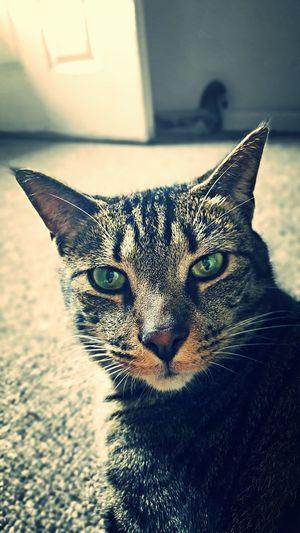 Buddy the cat.