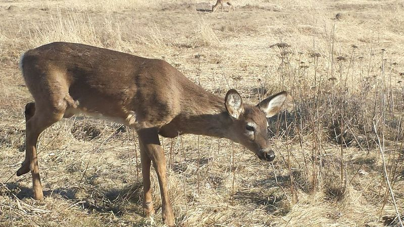 Animal Themes Animals In The Wild One Animal Day Mammal No People Outdoors Nature Animal Wildlife Deer ♥♥ Deer Animals In The Wild Cloud - Sky Check This Out