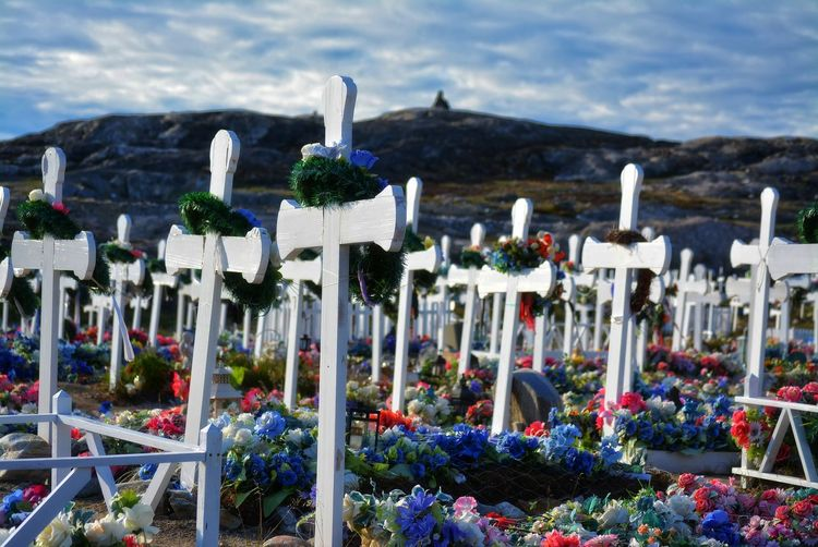 Ilulissat, Greenland - July, graveyard with many flowers and white crosses in the greenlandic tundra Flower Grave Cemetery No People Graveyard White Cross Crosses Colorful Mountain Day Flowering Plant Outdoors Religion Memorial Plant Landscape Quiet Silence Tranquility Quiet Places Peace Rest End Life