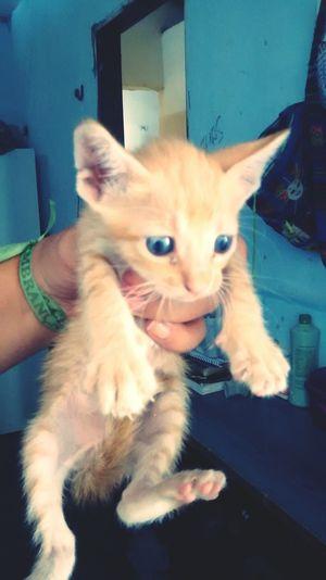 Cat Cat Lovers Cat♡ Yellow