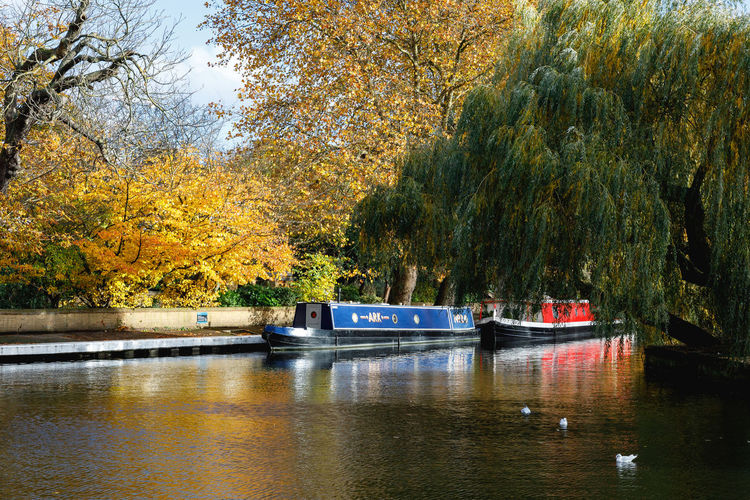Autumn in London Tree Water Plant Nautical Vessel Mode Of Transportation Transportation Nature Day Autumn Beauty In Nature Waterfront No People Change River Growth Outdoors Tranquility Tranquil Scene Passenger Craft London Travel Destinations Travel Autumn colors Autumn Leaves Mode Of Transport Autumn Mood