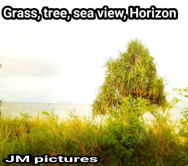 Tree Communication Text Sky Grass