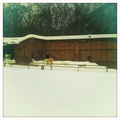 at Maruyama zoo Hipstamatic Jimmy Blanko