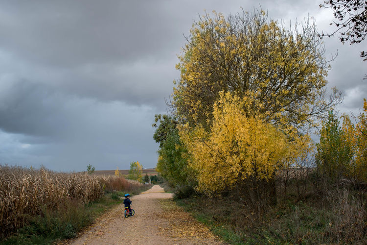 Trees on field by road against sky during autumn